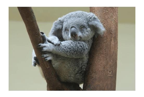 Koala Mattress WWF